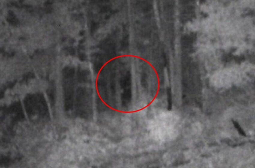 The Proof Is Out There: NEW BIGFOOT SIGHTING in North Carolina